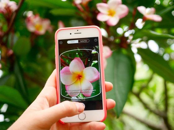 Bitkileri Fotoğraflarla Tanıyan PlantNet Mobil Uygulaması